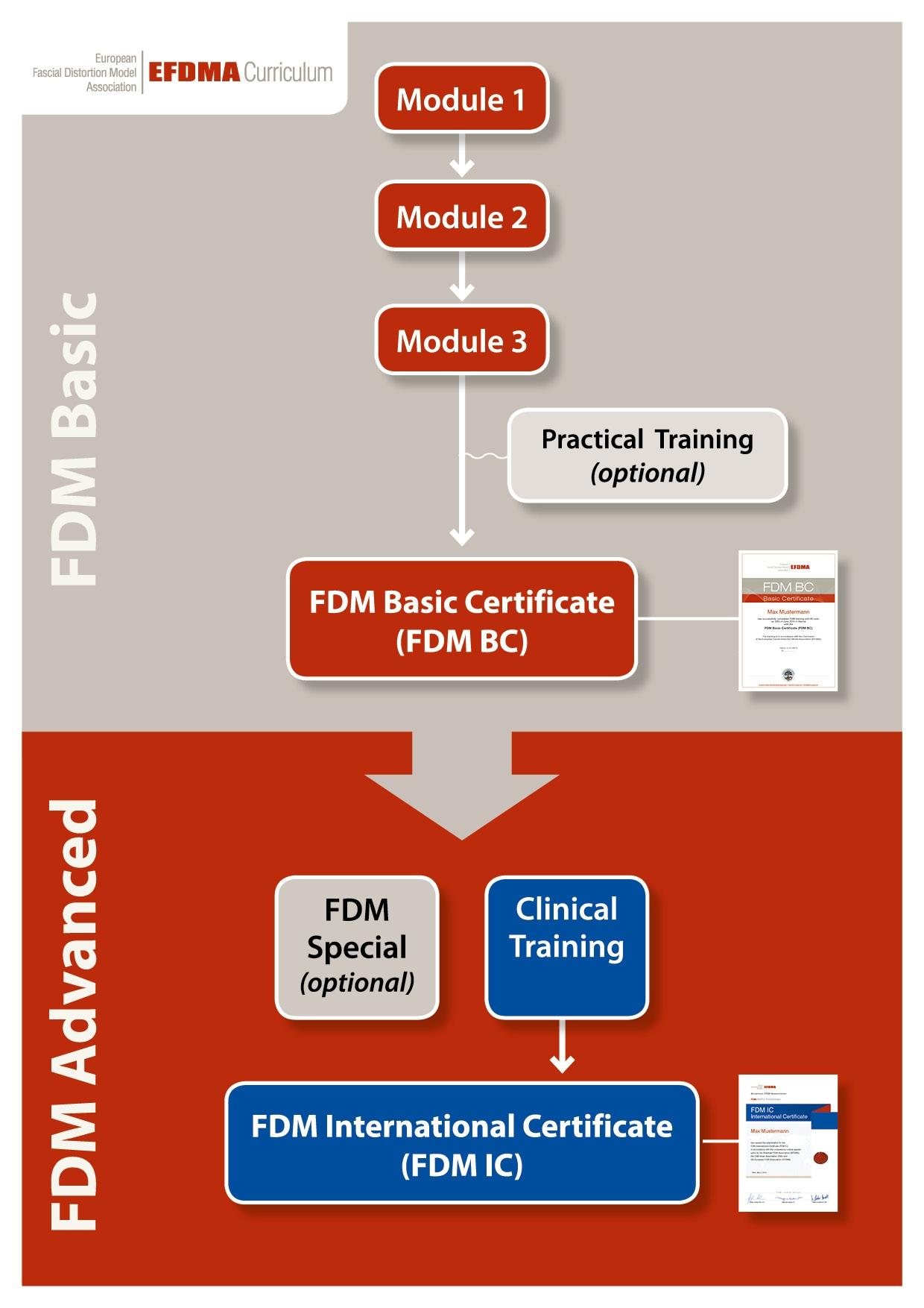 EFDMA Curriculum chart